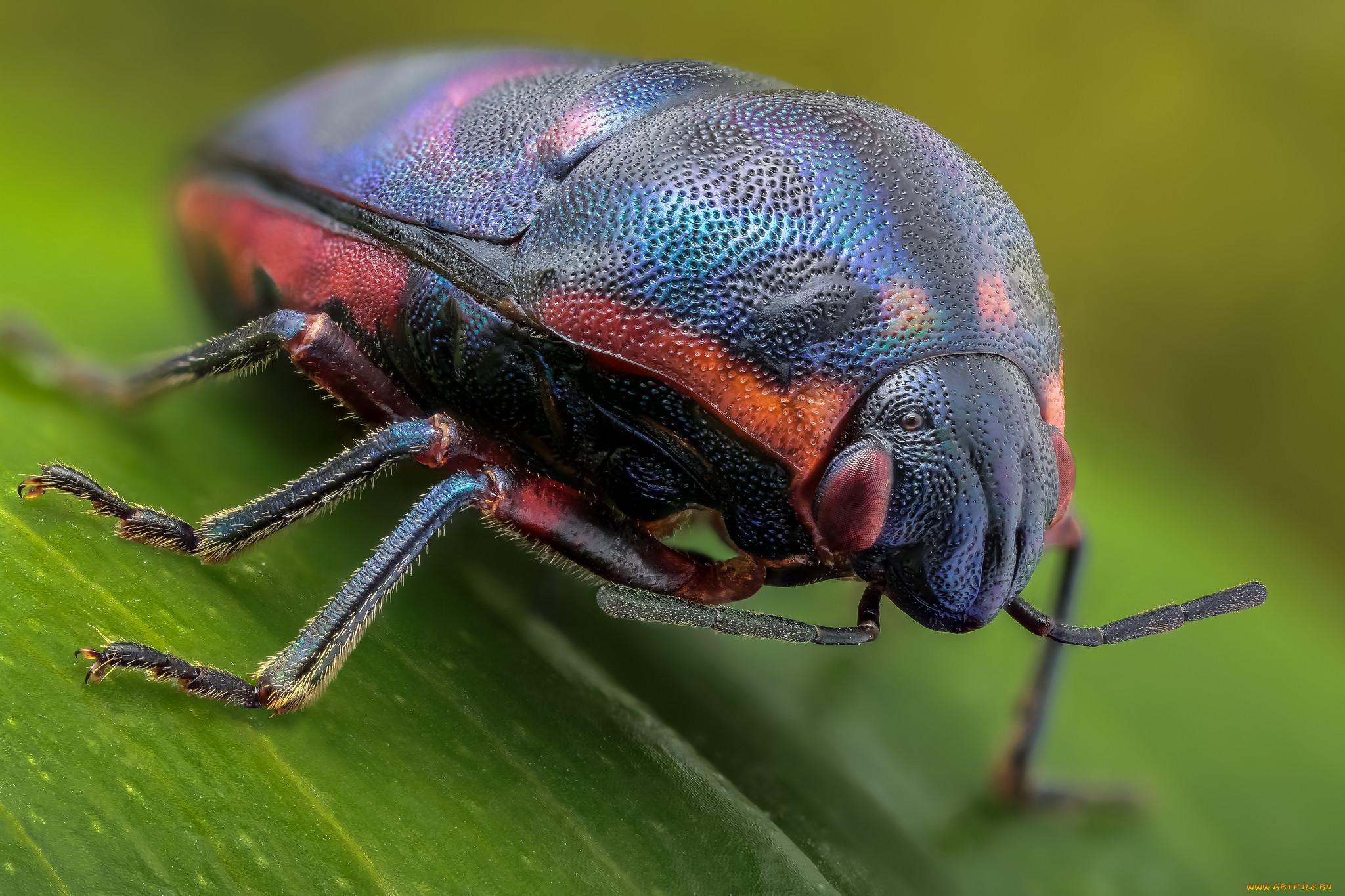 Разновидности жуков и их названия фото свадебные кольца